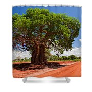 Baobab Tree On Red Soil Road Shower Curtain