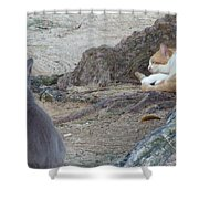 Barbados Cat Family Shower Curtain