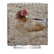 Barbados Free Range Chicken Shower Curtain