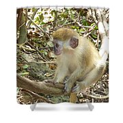 Barbados Green Monkey Shower Curtain
