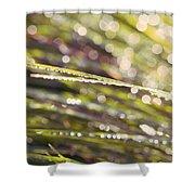Barbara Ann Shower Curtain