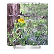 Barbed Beauty Shower Curtain