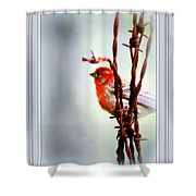 Barbed Wire And Finch Shower Curtain