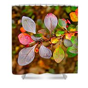 Barberry Shower Curtain