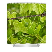 Barbwire And Vine Shower Curtain