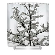 Bare Branches With Snow Shower Curtain