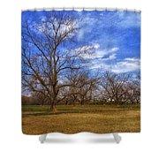 Bare Pecan Trees Shower Curtain
