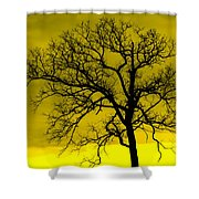 Bare Tree Against Yellow Background E88 Shower Curtain