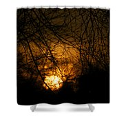Bare Tree Branches With Winter Sunrise Shower Curtain