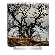 Bare Tree On The Hill Shower Curtain