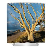 Bare Tree On The Spit Shower Curtain