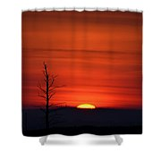 Bare Tree Sunrise Shower Curtain