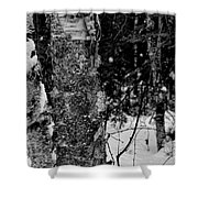 Bark And Trees In Winter Shower Curtain