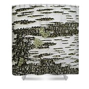 Bark Of Paper Birch Shower Curtain