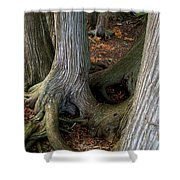 Barky Barky Trees Shower Curtain