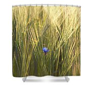 Barley And Corn Flowers In The Field Shower Curtain
