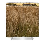 Barley Field Shower Curtain