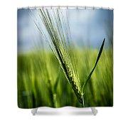 Barley Shower Curtain