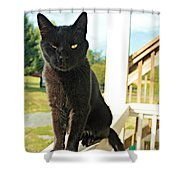 Barn Cat Pose Shower Curtain