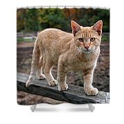 Barn Cat Shower Curtain by Rona Black