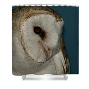 Barn Owl 2 Shower Curtain