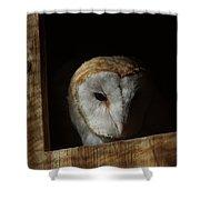 Barn Owl 5 Shower Curtain