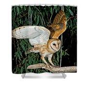 Barn Owl Alights Shower Curtain