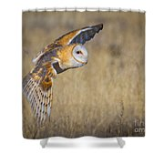 Barn Owl In Flight Shower Curtain