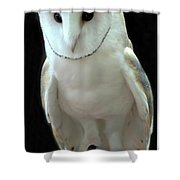 Barn Owl. Shower Curtain