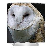 Barn Owl No.1 Shower Curtain