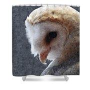 Barn Owl Painterly Shower Curtain