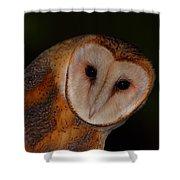 Barn Owl Portrait II Shower Curtain