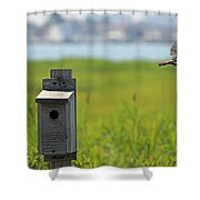 Barn Swallow - A Contest Runner Up Shower Curtain