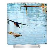 Barn Swallow In Flight Shower Curtain