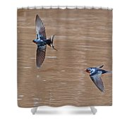 Barn Swallow In Flight Shower Curtain by Mike Dickie