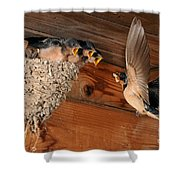 Barn Swallow Nest Shower Curtain by Scott Linstead