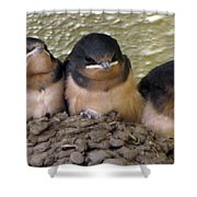 Barn Swallows 1 Shower Curtain