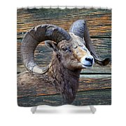 Barn Wood Bighorn Shower Curtain