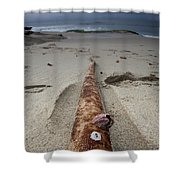 Barnacle Tales Shower Curtain