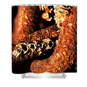 Barnacles And Rust  Shower Curtain