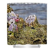 Barnacles Shower Curtain