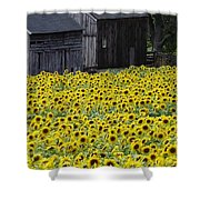 Barns And Sunflowers Shower Curtain