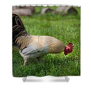Barnyard Rooster 2 Shower Curtain