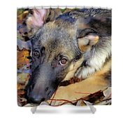 Baron In The Leaves Shower Curtain