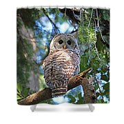 Barred Owl And Holly Shower Curtain