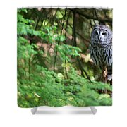 Barred Owl In Forest Shower Curtain
