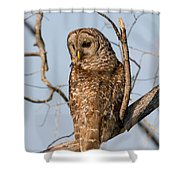 Barred Owl Okefenokee Swamp Georgia Shower Curtain