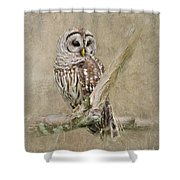 Barred Owl Portrait Shower Curtain
