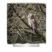 Barred Owl Square Shower Curtain