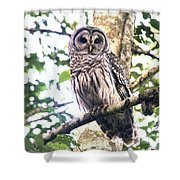 Barred Owl Staring Shower Curtain